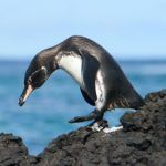 When to visit the Galapagos