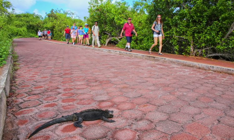 visit galapagos in summer